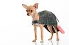 Cute little dog in cap | Stock Foto