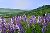美丽的乡村风景 | 免版税照片