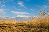 Beautiful landscape with reeds | Stock Foto