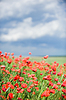 ID 3321018 | Beautiful red poppy field | High resolution stock photo | CLIPARTO