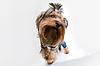 有趣的小狗狗 | 免版税照片