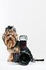 滑稽的小狗与数码相机 | 免版税照片