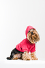 Cute Yorkshire terrier in pink pullover | Stock Foto