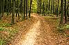 ID 3037824 | Weg im Hainbuchenwald | Foto mit hoher Auflösung | CLIPARTO