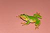 Фото 300 DPI: древесная лягушка на вертикальной стене