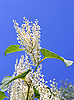Plant with white flowers  | Stock Foto