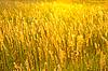 草甸草在阳光明媚的阴霾 | 免版税照片