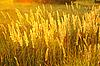草在阳光明媚的阴霾 | 免版税照片