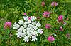 Flowering of motley plants | Stock Foto