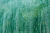 Condensed water drops | Stock Foto