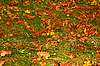 Colorful autumn maple leaves   Stock Foto