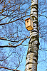 Bird house hanging on birch | Stock Foto