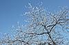 ID 3063190 | 겨울 나무 늦었다 덮여 | 높은 해상도 사진 | CLIPARTO