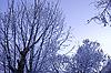 ID 3063191 | 겨울 나무 늦었다 덮여 | 높은 해상도 사진 | CLIPARTO