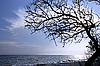 Photo 300 DPI: Dry tree above the sea