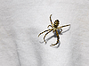 Photo 300 DPI: Spider on the fabric