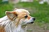 Photo 300 DPI: Dog outdoors
