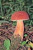 Mushroom | Stock Foto
