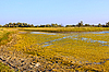 Salt marsh covered with water plants | Stock Foto