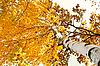 ID 3066685 | Birch tree in autumn season | High resolution stock photo | CLIPARTO
