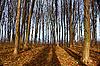 Autumn hornbeam forest | Stock Foto