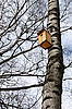 Birdhouse on the trunk of birch | Stock Foto