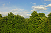 ID 3066818 | Thick Kastanien Kronen | Foto mit hoher Auflösung | CLIPARTO