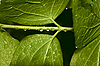Drops of water on leaves | Stock Foto