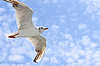 ID 3375988 | Seagulls Flug | Foto mit hoher Auflösung | CLIPARTO