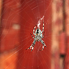 ID 5287629 | Big spider hanging on web | High resolution stock photo | CLIPARTO