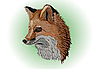 Vector clipart: old fox