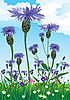 Vector clipart: knapweed
