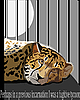 Векторный клипарт: гепард в клетке