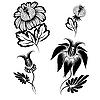 Florale Design-Elemente | Stock Vektrografik