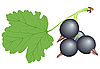 Vector clipart: Black currant