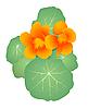 Vector clipart: Garden flower