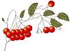 Vector clipart: Red Rowan