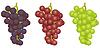 Trauben verschiedener Sorten