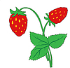 Vector clipart: bush of ripe strawberries