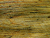 Old wooden texture   Stock Foto