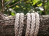 Rope on brabch | Stock Foto