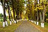 阳光明媚的秋日傍晚 | 免版税照片