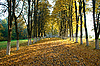 Sunny autumn evening | Stock Foto