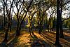 ID 3039773 | Sonniger Herbstmorgen | Foto mit hoher Auflösung | CLIPARTO