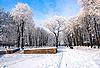 Beautiful frozen trees in the park   Stock Foto