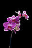 ID 3039832 | Orchid | High resolution stock photo | CLIPARTO