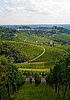 Vineyard in Stuttgart, Germany | Stock Foto