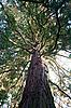 Photo 300 DPI: Cedar