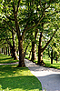 Photo 300 DPI: Alley with trees
