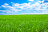 Beautiful field with green grass | Stock Foto